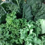 kale assorted