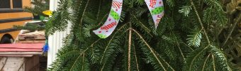 Local Trees & Swags Available